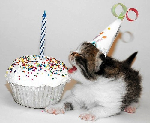 cute-animals-birthday-cat-kitten-party-hat-cake-pics